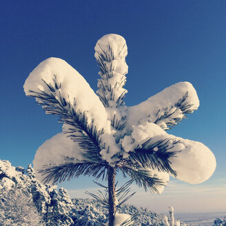 Germany, Palatinate Forest, fir branch in snow - GWF004015