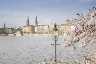 Germany, Hamburg, blossoming cherry tree at Binnenalster - NKF000259