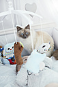 Baby lying in crib with cat looking at cuddly toys - STKF001217