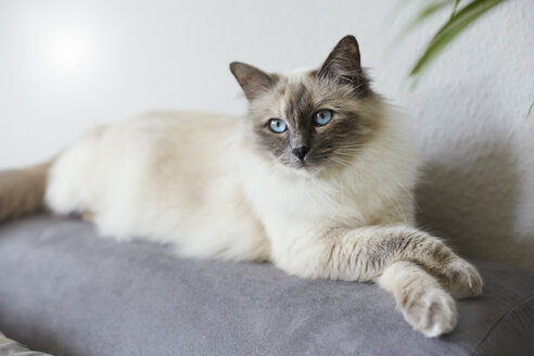 Cat lying on couch - STKF001229