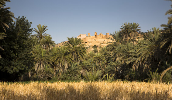 Morocco, Guelmim, field and kasbah in an oasis - FCF000660
