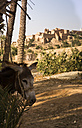 Morocco, Guelmim, oasis Ait Bekkou with kasbah - FCF000684
