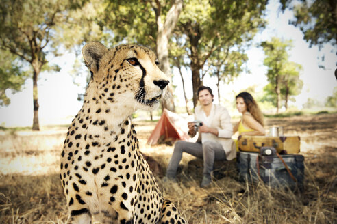 South Africa, cheetah on meadow with man and woman in background - TOYF000661