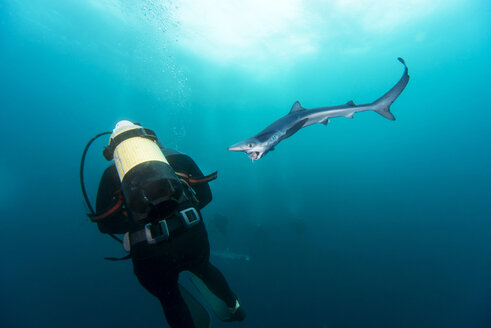 South Africa, diver and blue shark - GNF001326