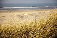 Germany, Lower Saxony, East Frisian Island, Spiekeroog, Dune with marram grass at beach - PCF000160