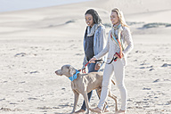South Africa, Cape Town, two friends walking on the beach with dog - ZEF005231