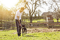 Man training his dog on a meadow - TAMF000165