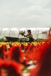 Woman working on field of flowers at a nursery - UUF004336