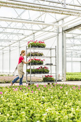 Woman pushing cart with flowers in a nursery - UUF004361