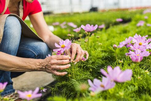 Woman in nursery examining flower - UUF004367
