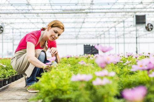 Woman in nursery examining flowers - UUF004371