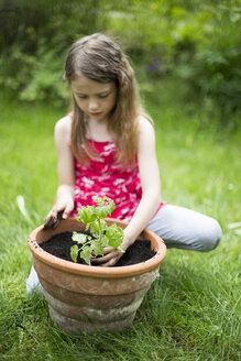 Little girl potting tomato plant in a garden - SARF001831