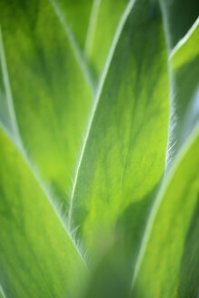 Palm leaves, close-up - GUFF000111