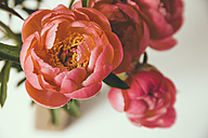 Close up of peonies - MFF001658