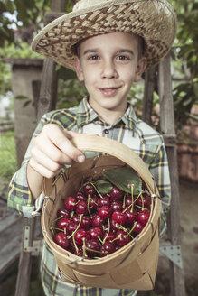 Boy harvesting Morello Cherries - DEGF000449