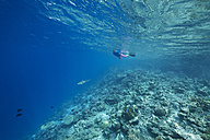 Maldives, woman snorkeling in the Indian Ocean - STKF001288