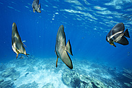 Maldives, fish in the Indian Ocean - STKF001304