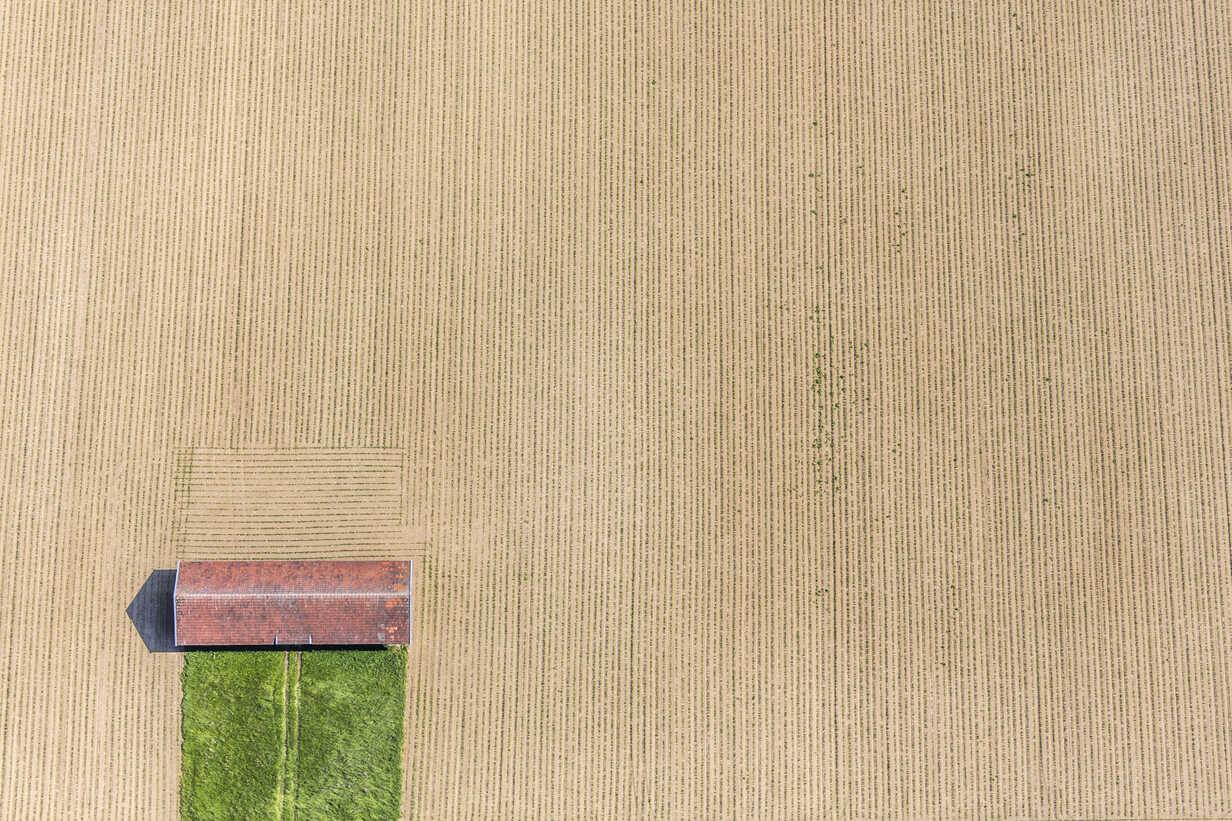 Barn on cornfield - KLEF000018 - Klaus Leidorf/Westend61