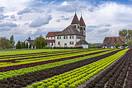 Germany, Baden-Wuerttemberg, Reichenau Island, lettuce cultivation at church St. Peter und Paul - KEB000205
