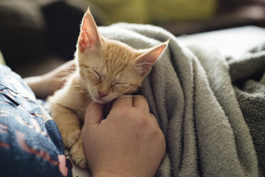 Woman's hand stroking tabby kitten - RAEF000205