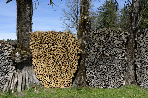 Germany, Bavaria, Stacked firewood between tree trunks - LBF001132