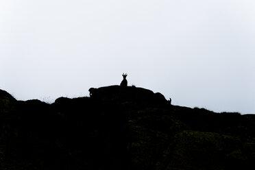 Switzerland, Lac de Cheserys, silhouette of Alpine Ibex on a rock - LOMF000017