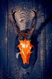 Painted antler of roe deer hanging on wooden wall - MAEF010768