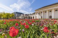 Germany, Baden-Wuerttemberg, Baden-Baden, Kurhaus, tulip bed - WDF003155