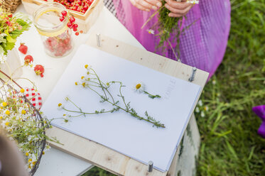 Germany, Saxony, drawing board, paper and chamomile flowers - MJF001610
