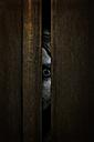 Ghost starring through gap of wardrobe doors - MID000492
