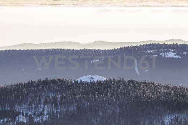 Germany, Saxony-Anhalt, Harz National Park, Coniferous forest in winter - PVCF000435