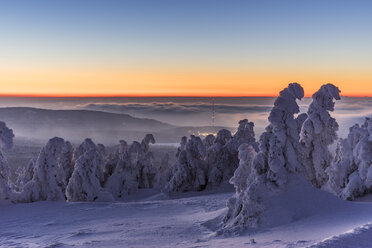 Germany, Saxony-Anhalt, Harz National Park, snow-capped firs at sunset - PVCF000440