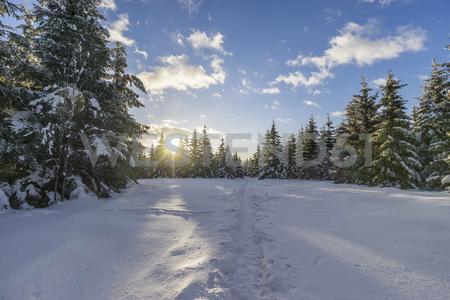 Germany, Saxony-Anhalt, Harz National Park, Landscape in winter, hiking trail in the evening - PVCF000462