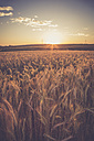 Germany, Baden-Wuerttemberg, barley field against the evening sun - LVF003646