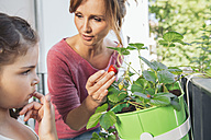 Mother showing her daugher a ripe strawberry on balcony - MFF001722