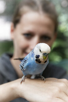 Light blue budgerigar on the hand of a woman - MIDF000503