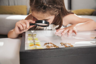 Girl looking at butterfly preparations with magnifying glasses - MFF001688