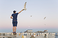 Germany, St Peter-Ording, young man standing on wooden fence feeding seagulls - MEMF000818
