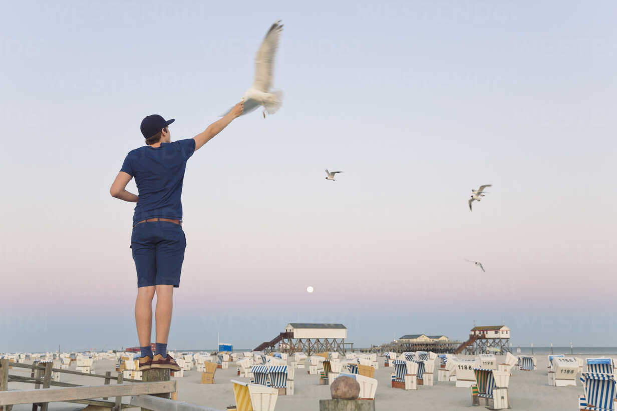 Germany, St Peter-Ording, young man standing on wooden fence feeding seagulls - MEMF000818 - Merle M/Westend61