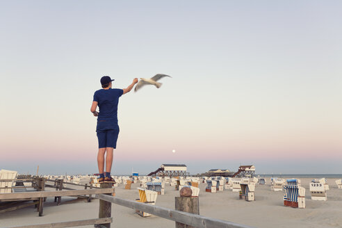 Germany, St Peter-Ording, young man standing on wooden fence feeding seagulls - MEMF000820
