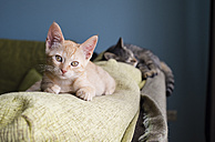 Two cats lying on backrest of a couch - RAEF000224