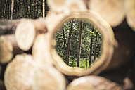 Mirror image of trees in the woods - ASC000219