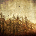 Trees and flying birds in the morning light, textured effect - DWIF000530