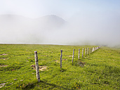 Spain, Pamplona, Iraty, pasture at nature park - LAF001430