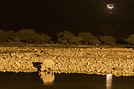 Namibia, Etosha National Park, African black rhino at Okaukuejo water hole by night - FOF008137