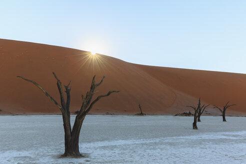 Namibia, Namib Naukluft, Namib Desert, dead acacias on clay pan - FOF008162