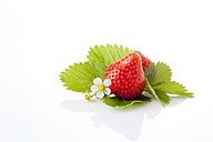 Strawberries, Fragaria, blossom and leaves - CSF025834