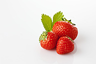 Strawberries, Fragaria, leaf - CSF025835