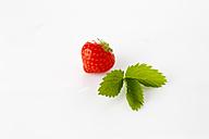 Strawberries, Fragaria, leaf - CSF025843