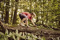 Boy climbing along fallen tree in forest - MFF001922
